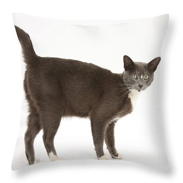Burmese-cross Cat Throw Pillow by Mark Taylor