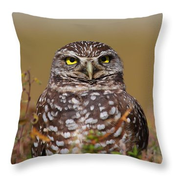 Burrowing Owl II Throw Pillow by Bruce J Robinson