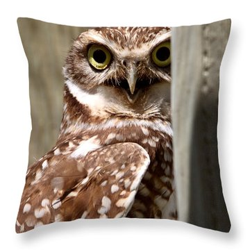 Burrowing Owl On Enclosed Window Seal Throw Pillow by Mark Duffy
