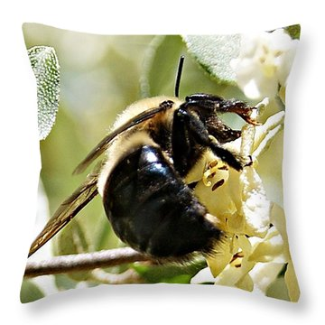 Busy As A Bee Throw Pillow by Joe Faherty