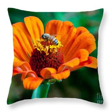 Busy As Throw Pillow by Dana Kern