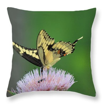 Throw Pillow featuring the photograph Butterflies Are Free by Kathy  White