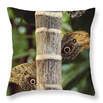 Butterflies Throw Pillow by Bilderbuch