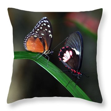 Butterflies Throw Pillow by Skip Willits