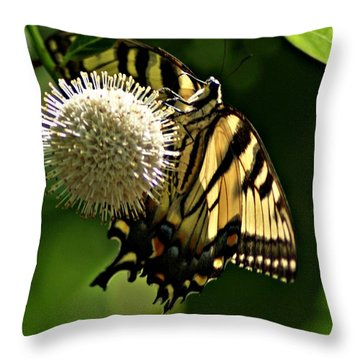 Butterfly 2 Throw Pillow by Joe Faherty