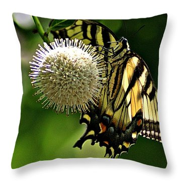 Butterfly 3 Throw Pillow by Joe Faherty