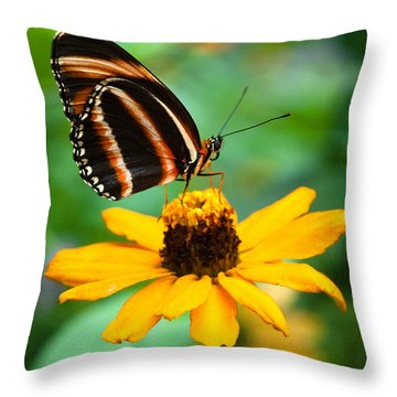 Throw Pillow featuring the photograph Butterfly And Flower by Dennis Dame