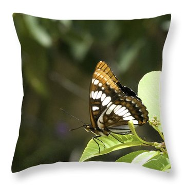 Throw Pillow featuring the photograph Butterfly At Rest by Betty Depee