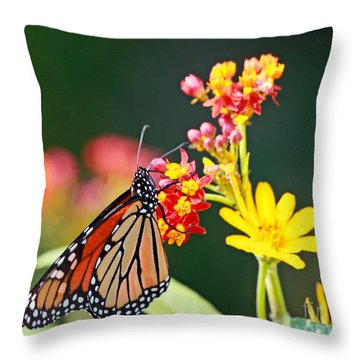 Butterfly Monarch On Lantana Flower Throw Pillow