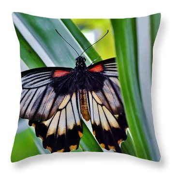 Throw Pillow featuring the photograph Butterfly On Leaf by Werner Lehmann