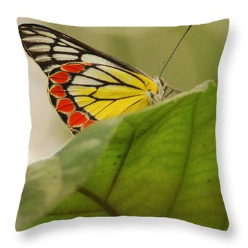 Throw Pillow featuring the photograph Butterfly Resting by Fotosas Photography