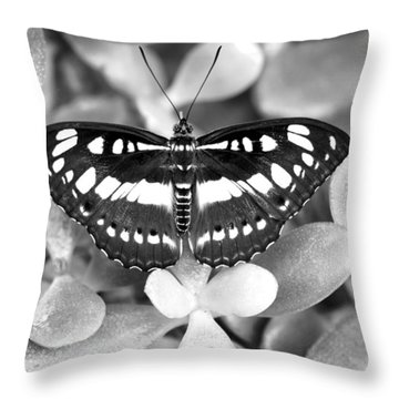 Butterfly Study #0061 Throw Pillow by Floyd Menezes
