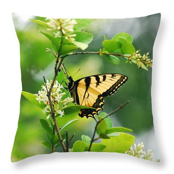 Throw Pillow featuring the photograph Butterfly Tiger Swallow by Peggy Franz