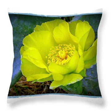 Throw Pillow featuring the photograph Cactus Flower by Judi Bagwell