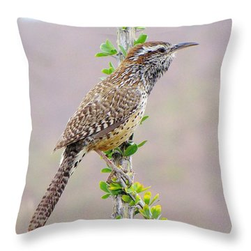 Cactus Wren Throw Pillow by FeVa  Fotos