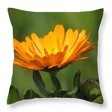 Calendula Bloom Throw Pillow by Bonnie Muir