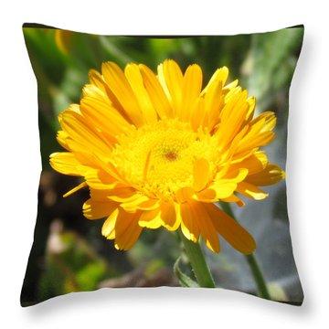 Calendula Blossom Throw Pillow by Bonnie Muir