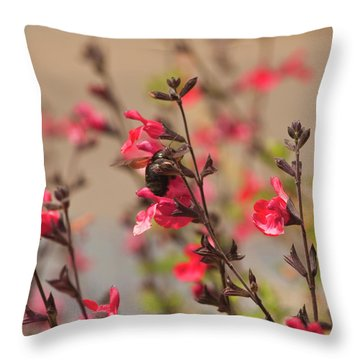 Throw Pillow featuring the photograph California Bumble Bee by Daniel Hebard