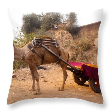 Throw Pillow featuring the photograph Camel Yoked To A Decorated Cart Meant For Carrying Passengers In India by Ashish Agarwal