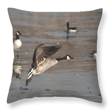 Throw Pillow featuring the photograph Canada Goose In Mid-flight by Mark McReynolds