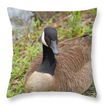 Canadian Goose Resting Throw Pillow