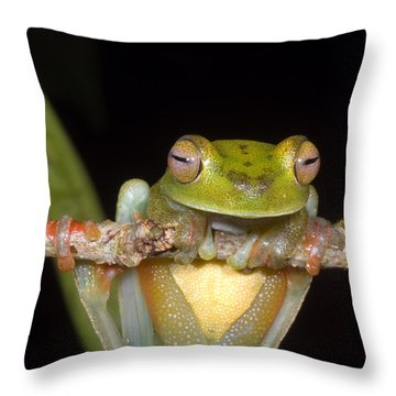 Canal Zone Tree Frog Throw Pillow by Dante Fenolio