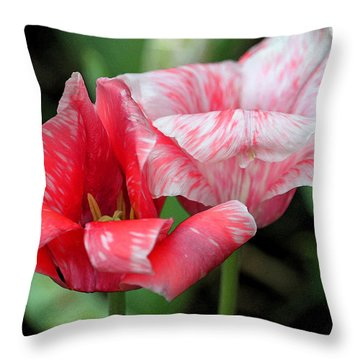 Candy Stripers Throw Pillow by Suzanne Gaff