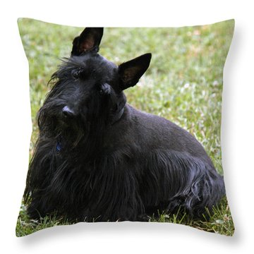 Throw Pillow featuring the photograph Can't Hear You by Wanda Brandon