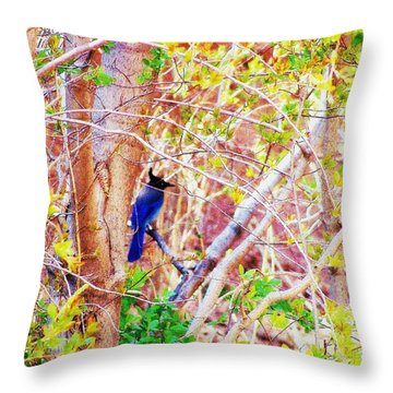 Canyon Jay  Throw Pillow by Clarice  Lakota
