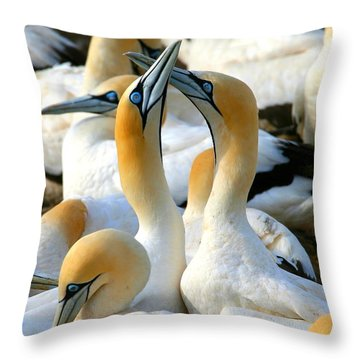 Cape Gannet Courtship Throw Pillow by Bruce J Robinson