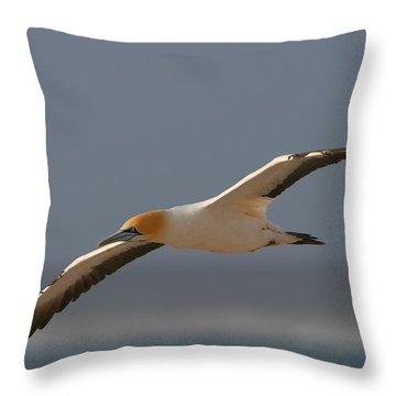 Cape Gannet In Flight Throw Pillow by Bruce J Robinson