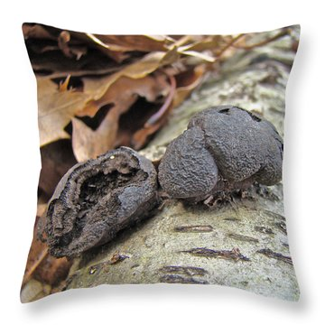 Carbon Balls Fungi - Daldinia Concentrica Throw Pillow by Mother Nature
