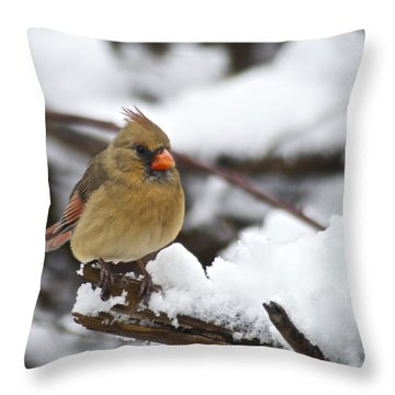 Cardinal Female 3679 Throw Pillow by Michael Peychich