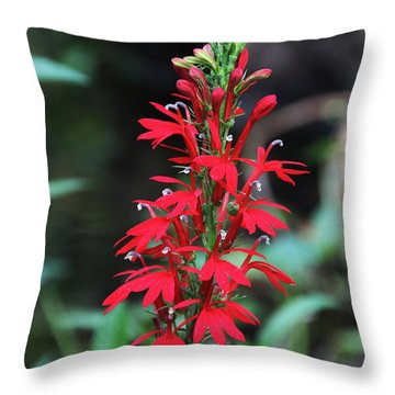 Cardinal Flower Throw Pillow