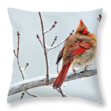 Cardinal I The Snow  Throw Pillow