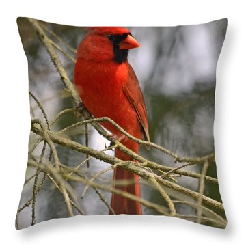 Cardinal In Spruce Throw Pillow