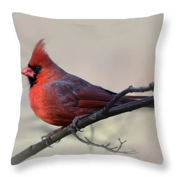 Cardinal On Gray Throw Pillow