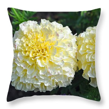 Throw Pillow featuring the photograph Carnations by Tikvah's Hope