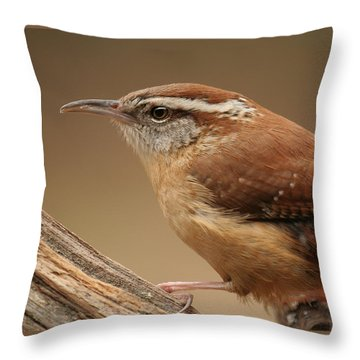 Carolina Wren Throw Pillow by Daniel Reed