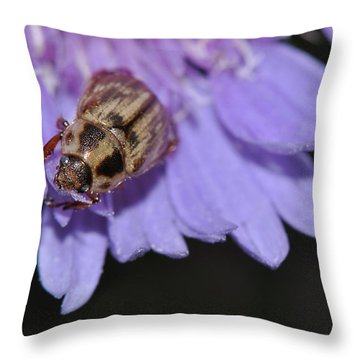 Carpet Beetle On Stokes Aster Throw Pillow
