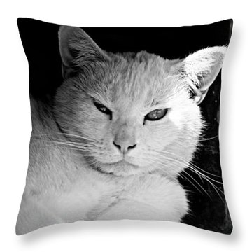 White Cat Throw Pillow