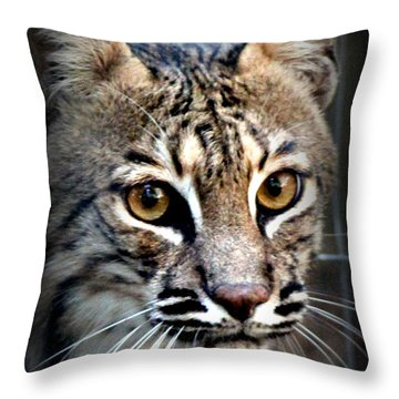 Throw Pillow featuring the photograph Cat Fever by Kathy  White