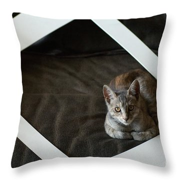 Cat In A Frame Throw Pillow by Micah May