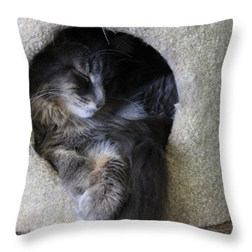 Cat In A Hole Throw Pillow