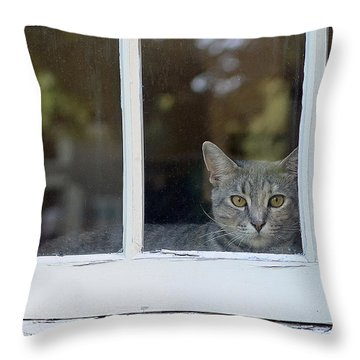 Cat In The Window Throw Pillow by Lisa Phillips