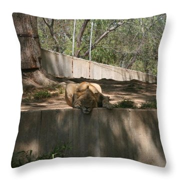Cat Nap Throw Pillow by Stacy C Bottoms