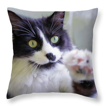 Cat Reaches For Camera Throw Pillow by Lori Coleman