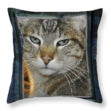 Cat Through A Tiny Window Throw Pillow by Mary Machare