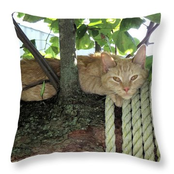 Throw Pillow featuring the photograph Catnap Time by Thomas Woolworth