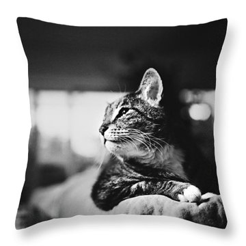 Cats Portrait Throw Pillow by Sumit Mehndiratta